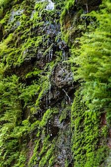 Disparo vertical de una hermosa cascada rodeada de vegetación en hawai