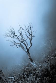 Disparo vertical de un hermoso árbol seco en medio de un bosque muerto en madeira, portugal