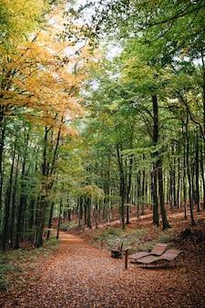 Disparo vertical de un hermoso camino cubierto de árboles de otoño en un parque con dos bancos en la parte delantera