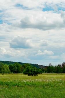 Disparo vertical de un hermoso valle verde bajo el cielo nublado