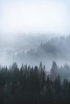 Disparo vertical de hermosos árboles verdes en el bosque en la mesa de niebla