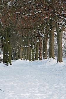 Disparo vertical de hileras de árboles desnudos y el paisaje del parque cubierto de nieve pesada en brabante, países bajos