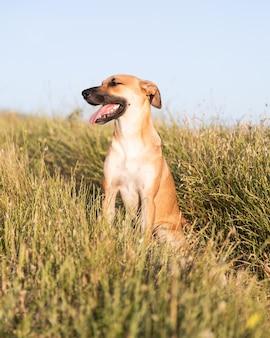 Disparo vertical de un lindo perro black mouth cur sentado en medio de un campo cubierto de hierba