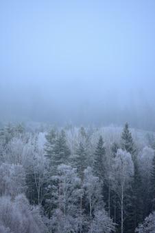 Disparo vertical de maravillosos árboles congelados en un día brumoso