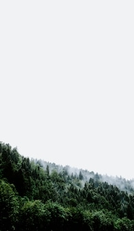Disparo vertical de una nube de humo saliendo de un paisaje verde tocando el cielo