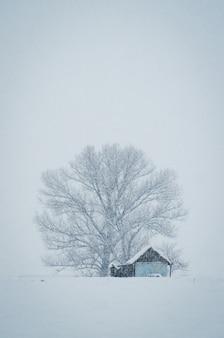 Disparo vertical de una pequeña cabaña en frente del gran árbol cubierto de nieve en un brumoso día de invierno