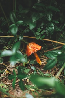 Disparo vertical de un pequeño hongo naranja rodeado de césped y plantas en un bosque