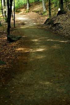 Disparo vertical de un pequeño sendero en el bosque durante el día