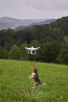 Disparo vertical de un perro en un prado saltando para alcanzar el avión no tripulado volador