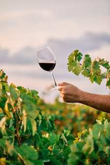 Disparo vertical de una persona sosteniendo una copa de vino en el viñedo bajo la luz del sol