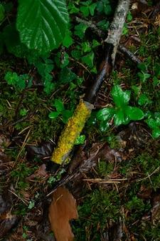 Disparo vertical de las plantas húmedas y las raíces de los árboles en el bosque