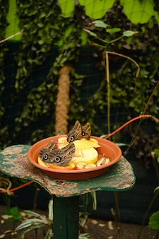Disparo vertical de un plato lleno de frutas con mariposas búho rodeado de vegetación