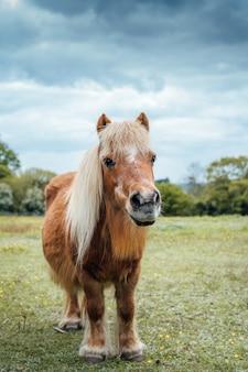 Disparo vertical de un pony marrón en el campo de hierba durante el tiempo nublado