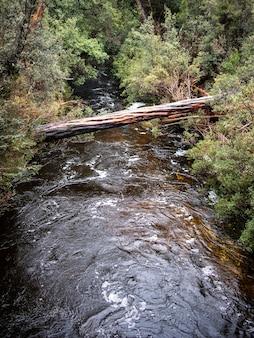 Disparo vertical de un puente de troncos sobre un pequeño río a través de un bosque