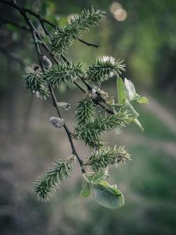 Disparo vertical de una rama de pino sobre fondo de luces bokeh