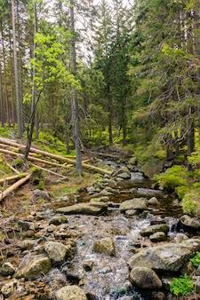 Disparo vertical de un río lleno de piedras en el bosque con árboles altos