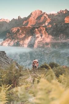 Disparo vertical de una vaca en las montañas durante un día soleado: papel tapiz perfecto