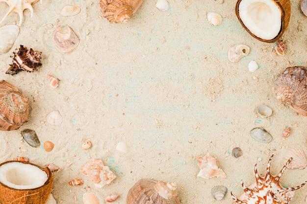 Disposición de conchas y cocos sobre arena.
