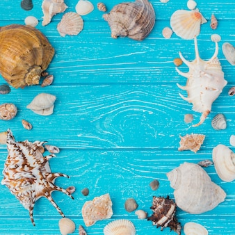 Disposición de conchas marinas a bordo.