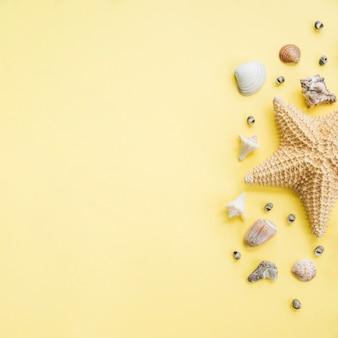 Disposición de grandes estrellas de mar cerca de conchas marinas