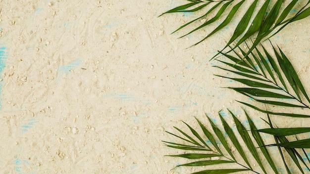 Disposición de hojas verdes entre arena.