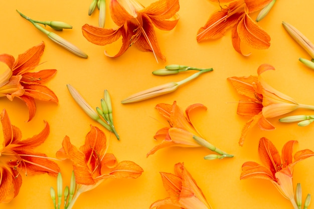 Disposición plana de lirios naranjas