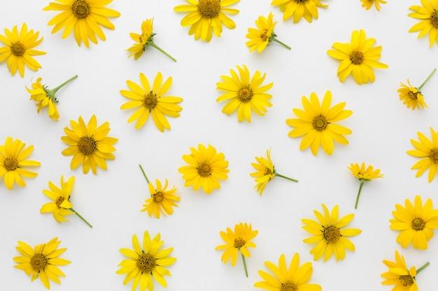 Disposición plana de margaritas amarillas
