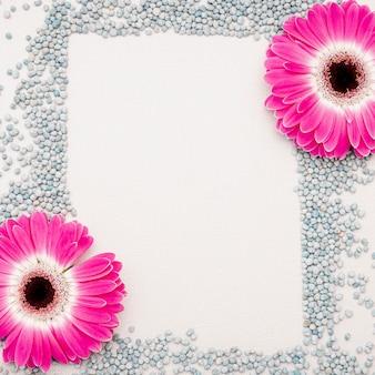Disposición plana de margaritas rosas y guijarros