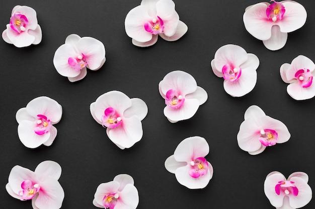 Disposición plana de orquídeas
