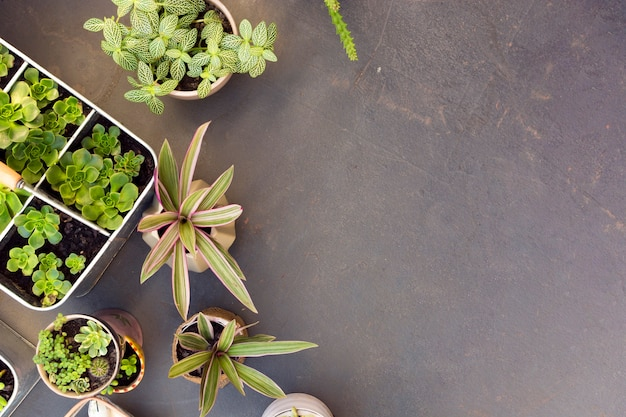 Disposición de la vista superior de diferentes plantas con espacio de copia