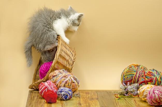Divertido gatito curioso juguetón