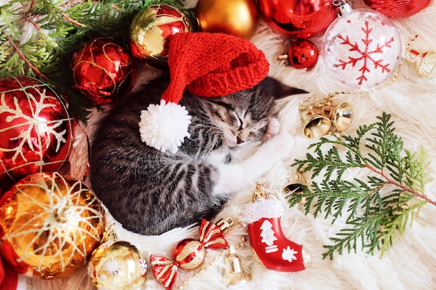 Divertido gatito duerme en decoraciones rojas brillantes de navidad