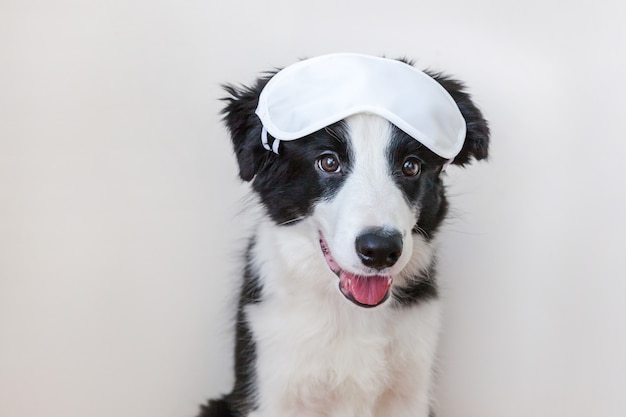 Divertido lindo cachorro smilling border collie con antifaz para dormir aislado sobre fondo blanco.