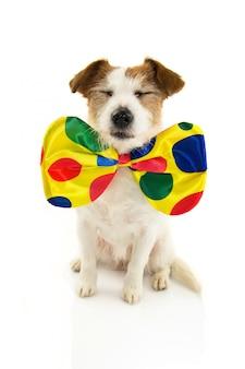 Divertido perro disfrazado de payaso para carnaval.