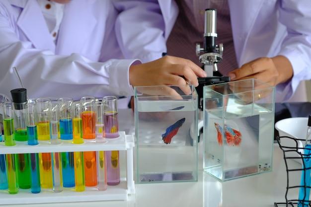 Doctor de las manos que sostiene el microscopio para analizar pescados que luchan tailandeses hermosos en el tanque de agua.