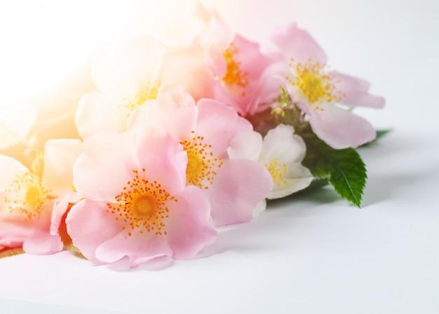 Dogo hermosas flores color de rosa en blanco