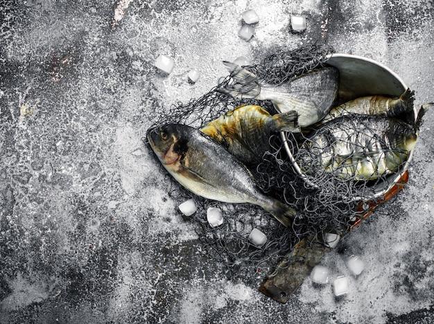 Dorado pescado fresco sin preparar en un viejo balde con red de pesca en la mesa rústica.