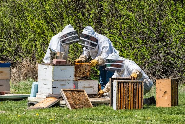 Dos apicultores irreconocibles inspeccionando bandejas de cría de colmena super