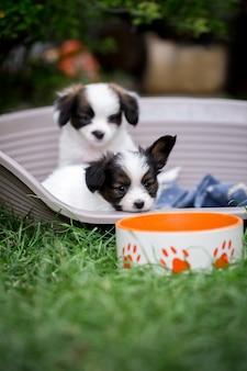 Dos cachorros en una canasta cerca del tazón