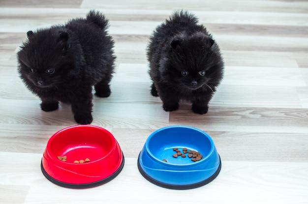Dos cachorros negros con tazones de comida en el piso de la cocina
