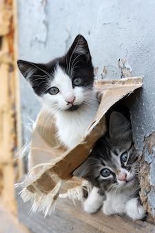Dos gatito juguetón sin hogar divertido