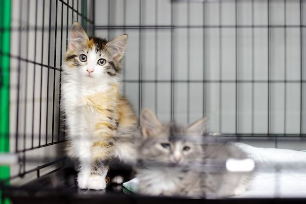 Dos gatitos en una jaula en un refugio de animales.