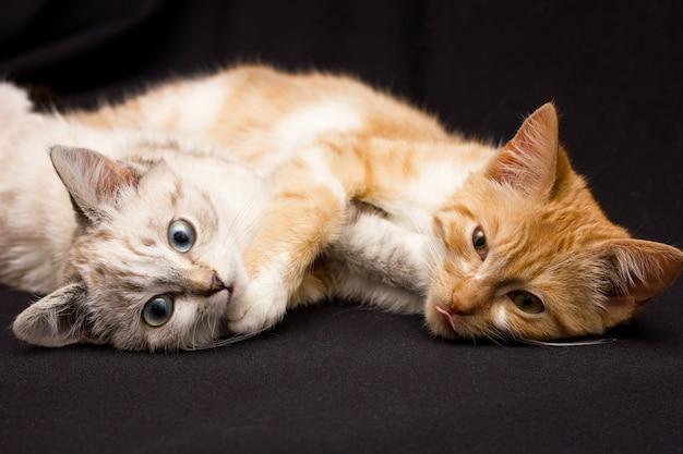 Dos gatos duermen en un abrazo, sobre un fondo negro.