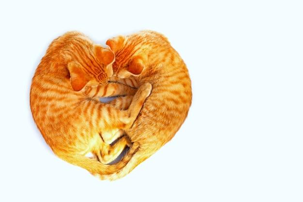 Dos gatos durmiendo en forma de corazón.