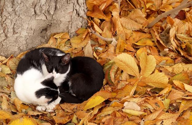 Dos gatos en hojas de otoño