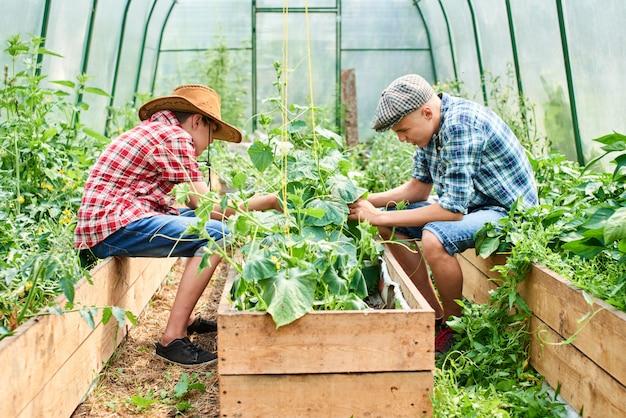 Dos hermanos cuidan plantas en invernadero
