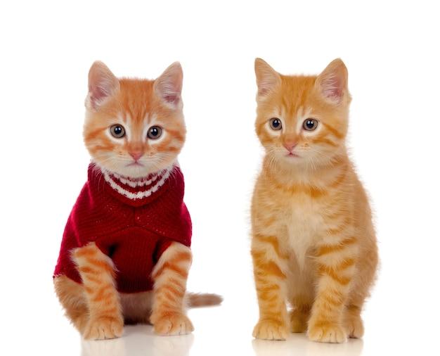 Dos hermosos gatos rojos
