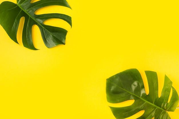 Dos hojas de monstera sobre fondo amarillo