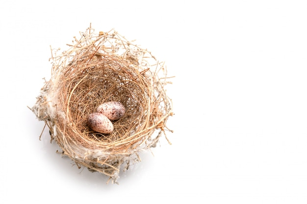 Dos huevos de paloma pájaros en hierba seca anidan en blanco