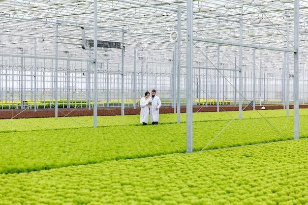 Dos investigaciones hombre y mujer examinan la vegetación con una tableta en un invernadero blanco